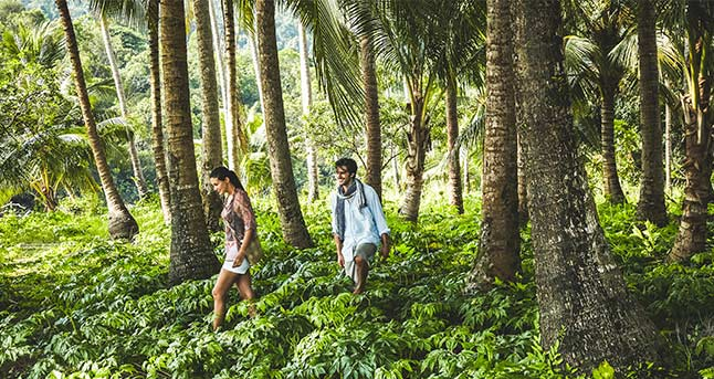 Rainforests & Ruins: Protecting Cambodia's Wild