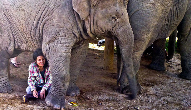 Spend the day with an Asian Icon at the Elephant Nature Park